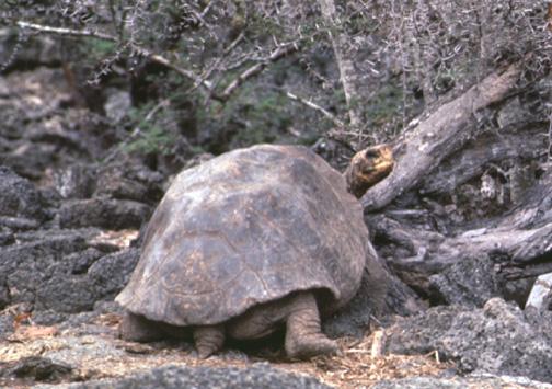 TortoiseLookingBack.jpg
